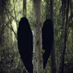 4k Halloween Dark Angel Woman with Black Wings in Forest Hidding Stock Footage