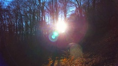 Magical forest forward motion bare trees leaves carpet flashing sun light autumn Stock Footage