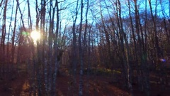 Lateral beautiful magical forest flashing sun trees sunlight autumn sunny sky Stock Footage