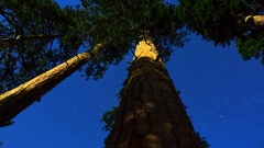 MoCo Astro Timelapse of Alpine Forest Low Angle Tracking  Stock Footage