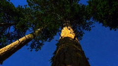 MoCo Astro Timelapse of Alpine Forest Low Angle Tracking -Zoom Out- Stock Footage