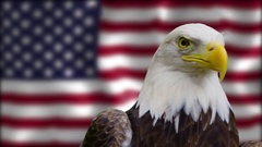 Bald Eagle Staring at the Camera in front of American Flag Stock Footage