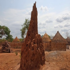 Africa termite mounds  Guine bissau Stock Footage