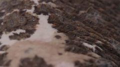 Monitor Lizard macro skin scales and scars Stock Footage