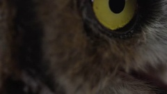 Great horned owl macro of beak and face Stock Footage