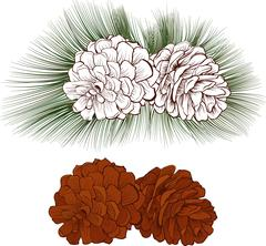 Pine cone color with needle Stock Illustration