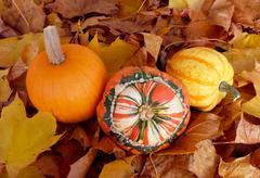 Pumpkin, squash and gourd on fall leaves Stock Photos