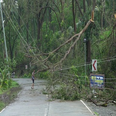 Damage To Power Lines And Trees In Aftermath Of Hurricane Stock Footage