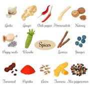 Icon big set of popular culinary spices Stock Illustration