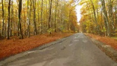 Driving car in beautiful autumn woods with colorful foliage tree in rural area. Stock Footage