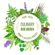 Culinary herbs big set with round emblem.  Stock Illustration