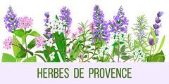Herbes de Provence color  Stock Illustration