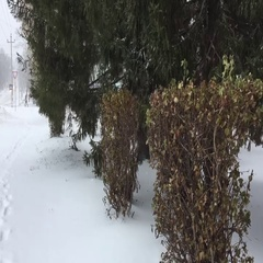 Anomalies in the weather – a Blizzard in the autumn Stock Footage