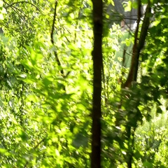 Waling through the green forest side. Stock Footage
