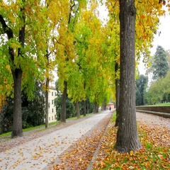 Walkway full of trees during the autumn in Lucca, Tuscany, Italy Stock Footage