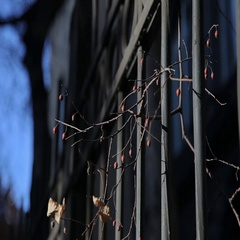 Prague Sprig on the fence. Stock Footage