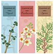 Essential oil set collection. Myrrh, frankincense, cypress  Stock Illustration