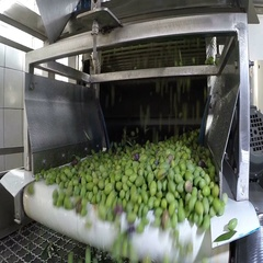 The process of olive cleaning in a modern oil mill Stock Footage
