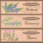 Aromatherapy set collection. Verbena, rosemary, Stock Illustration