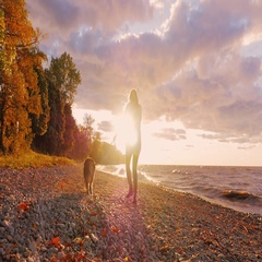 Young woman walking with a dog on the shore of Lake Ontario at sunset Stock Footage