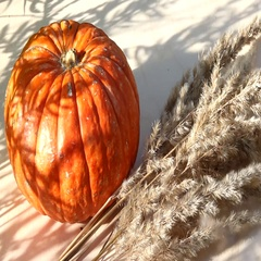 Pumpkins and pine cones for autumn festival Stock Footage