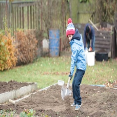 Little boy, shoveling in the garden, digging autumn time Stock Footage