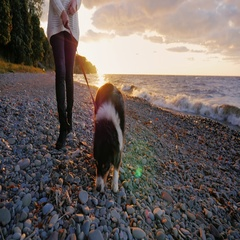 Walking the dog along the bank of a lake or the sea. Australian Shepherd is next Stock Footage