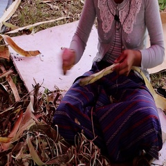 Bhutan women debarking branches for paper making with knives Stock Footage