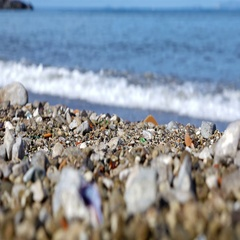 Low angle view of sea shore with seashells and stones, change of focus Stock Footage
