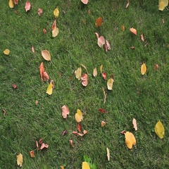 Yellow and embroidered leaves on the green lawn Stock Footage