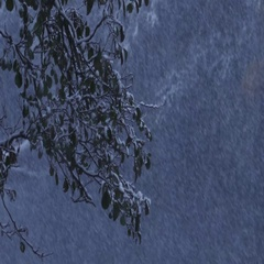 Heavy snowfall in a forest, onset of winter Stock Footage