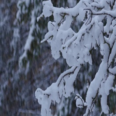 Onset of winter, branches covered with snow Stock Footage