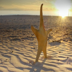 Fine sand beach with sea star at sunset golden sunlight Stock Footage