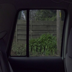 Car Dolly. Window, Forest Stock Footage