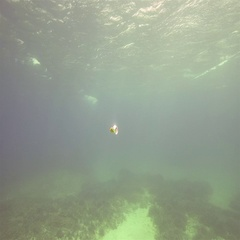 Metal box of drink  sank to the bottom of the sea Stock Footage