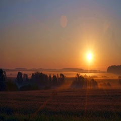 Sunrise in field with fog. The bright sun. The sky at dawn and the glare in the  Stock Footage