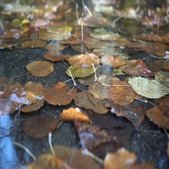 Rain drops falling at the puddle with autumn leaves 2 Stock Footage