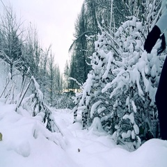 Slender young woman in grey jacket walking in a beautiful snowy winter forest Stock Footage
