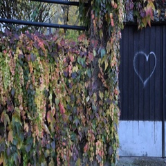Drawn heart and colorful creeper on the wall Stock Footage