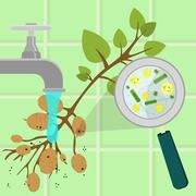 Washing contaminated potato tree Stock Illustration