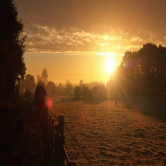 Rural countryside bright morning sunshine after sunrise Stock Footage