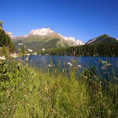 Clear Silvaplanersee with Swiss Alps in the background. Stock Footage