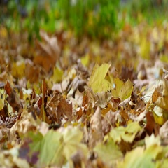 Woman Walks Through Fall Leaves Stock Footage