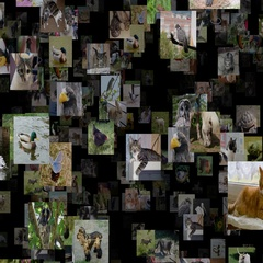 Photo stream of animals seamless loop Arkistovideo