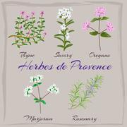 Herbes de Provence. Thyme, Savory, Oregano, Marjoram, Rosemary.  Stock Illustration