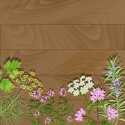 Flowering herbs on wooden backgroud. Thyme, rosemary, anise, fennel,  Stock Illustration