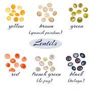 Set of different types of lentils.Macro. Yellow, brown, green, red, french green Stock Illustration