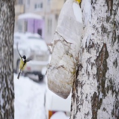 Birds titmouse eat from feeders in the winter in the snowfall Stock Footage