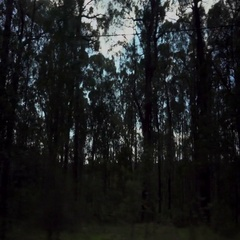 Car Dolly. Dandenong Ranges Forest Passing By Stock Footage