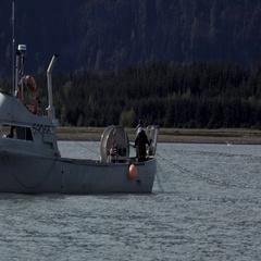 Fishermen on Fishing Boat with Salmon In Net Alaska Stock Footage